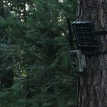 WildGuarder-10 Trail Camera Features To Look For